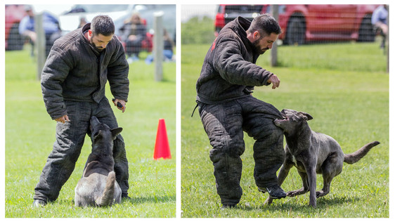 French Ring Sport Trial presented by Capital City Dog Sport